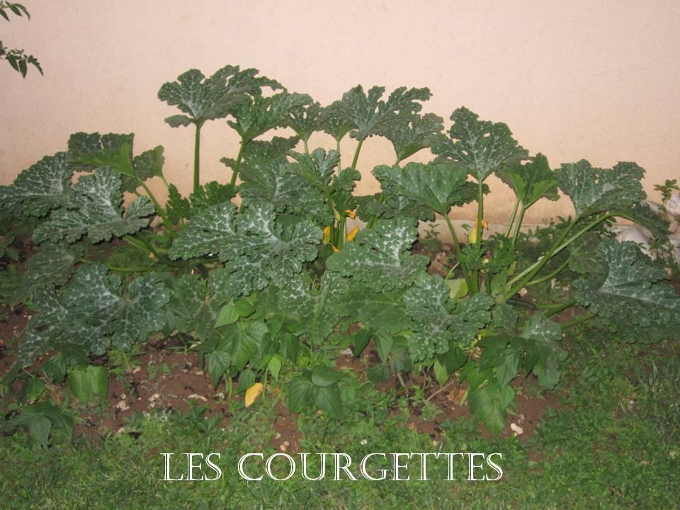 Dans mon jardin il y a des courgettes - Comment congeler les courgettes du jardin ...